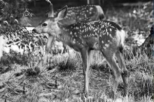 Mid-day wildlife photography
