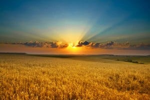 Grad ND filter used on a landscape of a sunrise and wheat field.