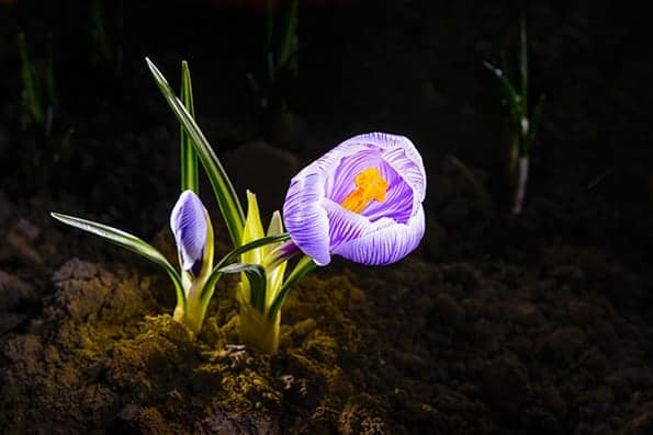 Light painting technique in photography used on a close-up photo of a flower