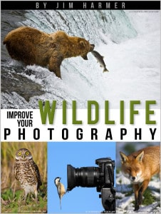 Wildlife Photography Book Cover