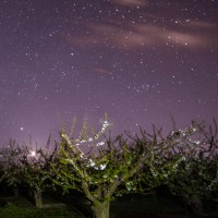 Idaho night photo of stars and blossoming trees in Marsing, Idaho