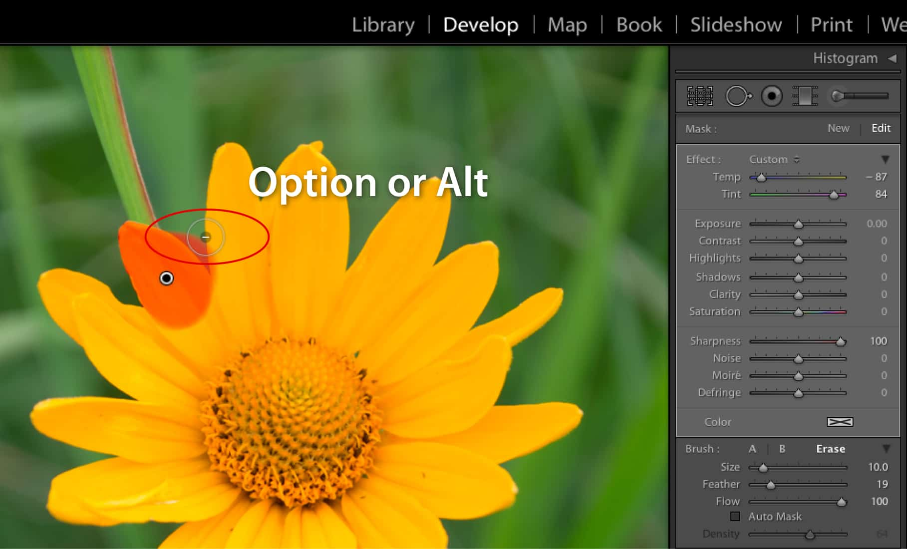 20 Need-to-Know Lightroom Shortcuts to Speed Up Your Workflow