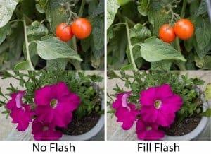 Fill Flash