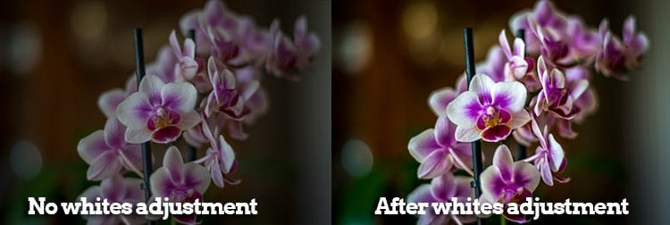 Before and after of a whites adjustment on a flower pic.