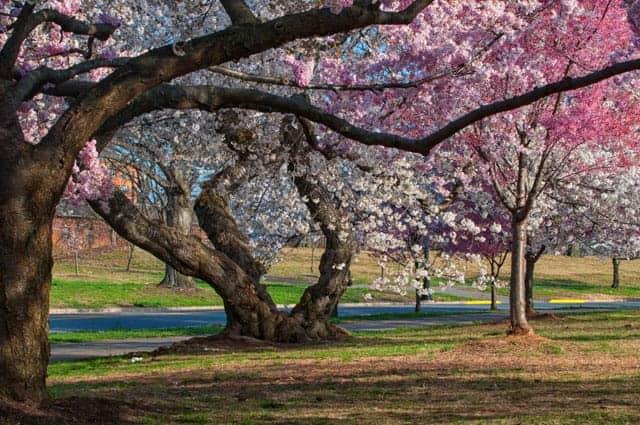 Branch Brook Park. Photo by Andrea Blasko.
