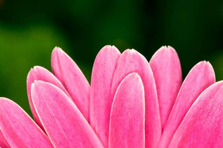 Petals by Rusty Parkhurst