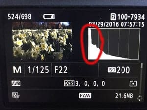 Understand your histogram to ensure correct exposure.