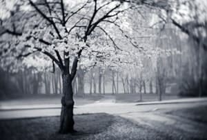 Is it infrared or is it Lensbaby? Photo by Tracy Munson