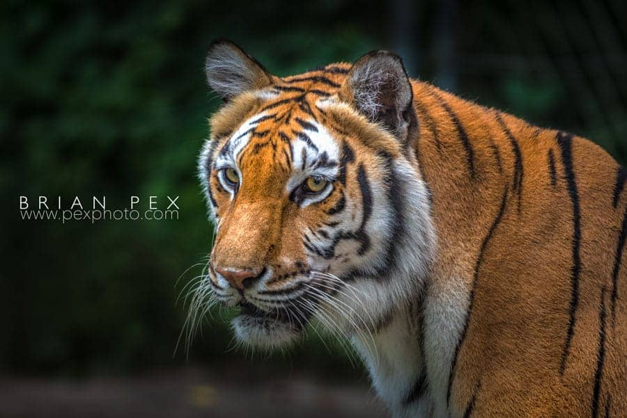 Nature's Softbox - a cloudy sky - is the best light possible for shooting at a ZOO!