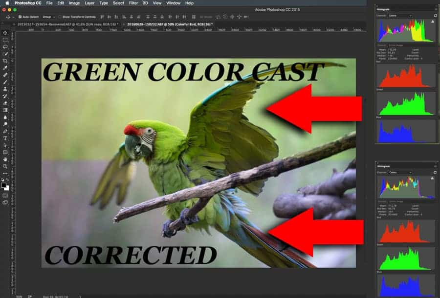 The green color cast in this image is very evident. Using this one click method is truly amazing. It takes images with very strong color casts and neutralizes them.