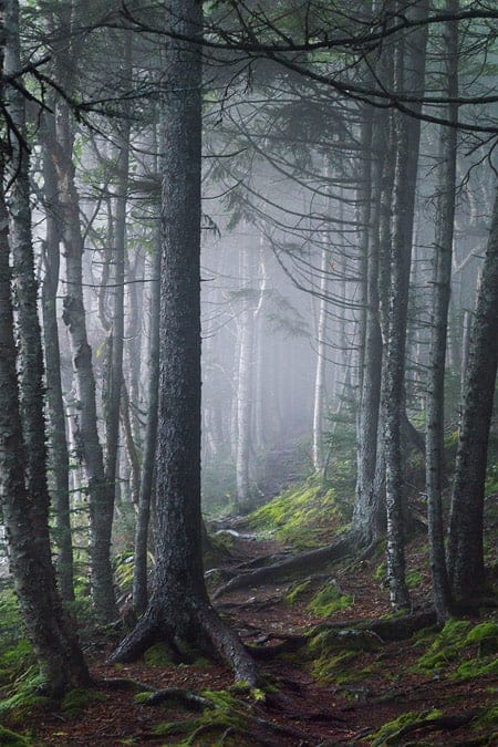 A photo of fog rolling through the forest in Fundy National Park, New Brunswick.