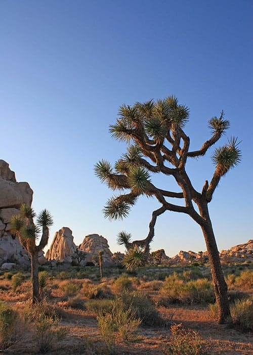 Joshua Tree Photography Guide And Best Photo Spots Improve