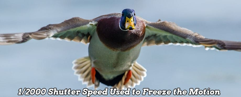 Introduction To Shutter Speed Easy Explanation And