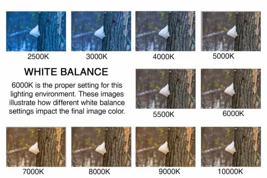 white balance basics a mini guide for photographers improve