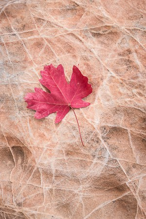 Leaf on textured rock.