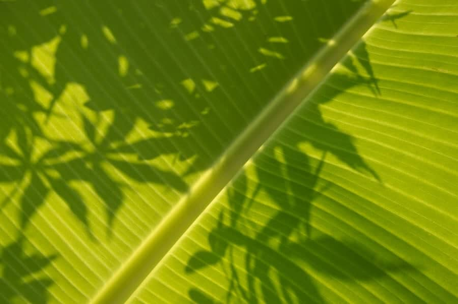 Shadows on a leaf.