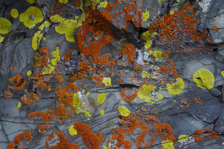 Lichen on a rock.