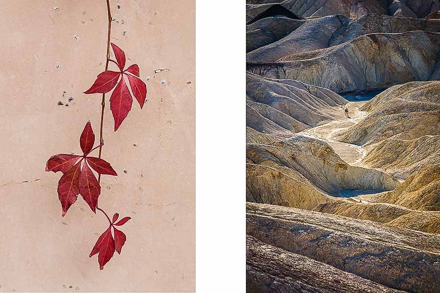 Red vine on shaded wall (left) an trail to Golden Canyon from Zabriskie Point (right).