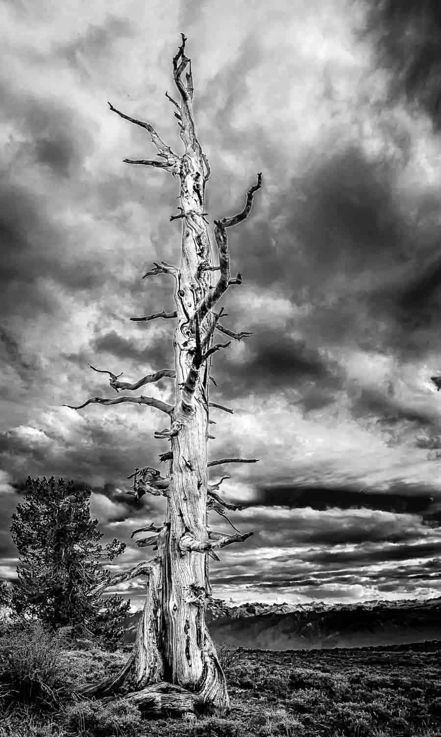This shot would likely look overprocessed when trying to draw the drama out of the clouds this much but in monochrome i think it works photo by rick