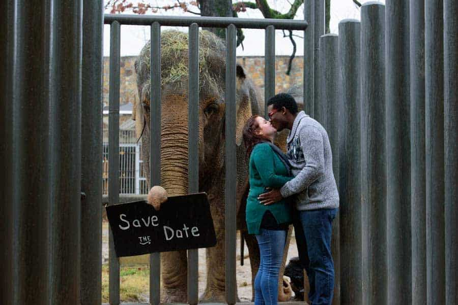 zoo engagement photo