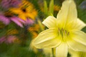 Flowers, photographed with the Lensbaby Sol 45 creative effects lens.